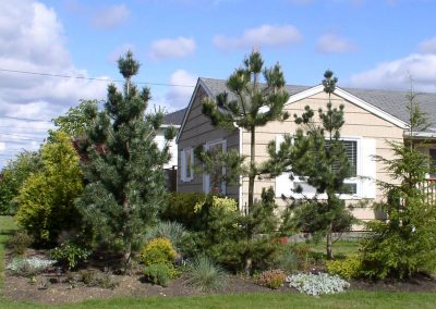 Tree screen planting in front yard